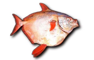 Moonfish Hawaii